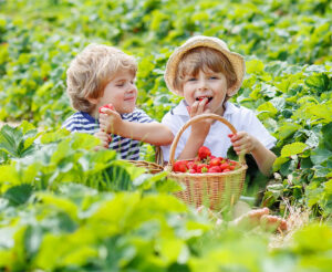 Kids at Strawberry Farm Strawberry Field