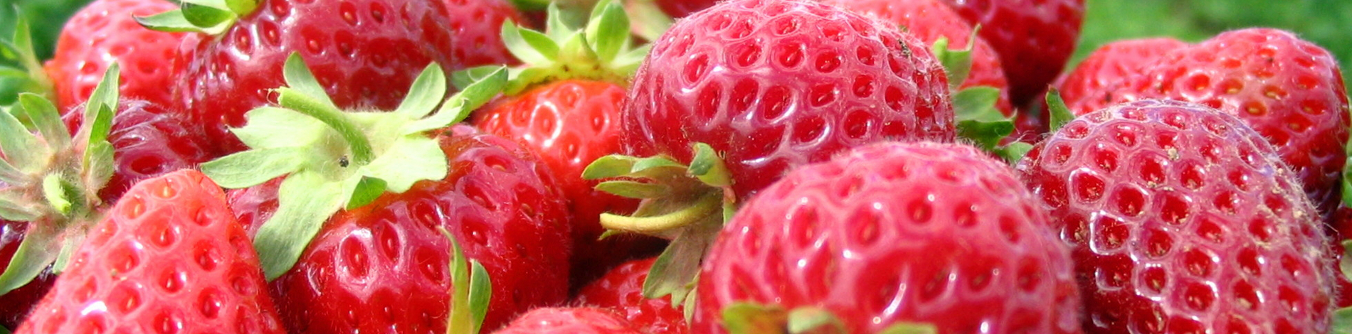 North Carolina Strawberry Farms, Strawberry Recipes, and Strawberry Grower Information