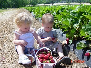 NC Strawberry Association Farm, Growers, and Consumers