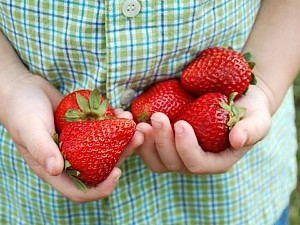 North Carolina Strawberry Association Find NC Strawberry Farms