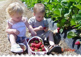 WE HAVE STRAWBERRY ACTIVITIES FOR KIDS